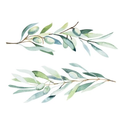 Sticker Watercolor olive branch. Sketch of olive branch on white background