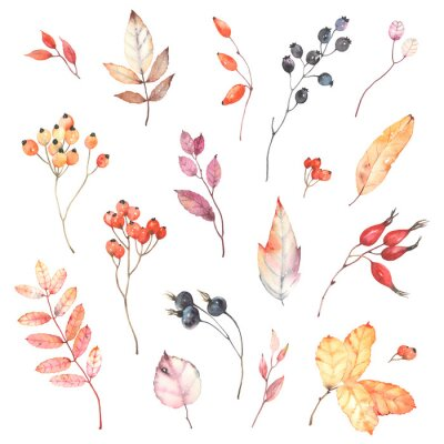 Sticker Watercolor set of branches with berries dog rose, rowan and colorful leaves. Autumn illustration isolated on white background, decoration collection for your design.