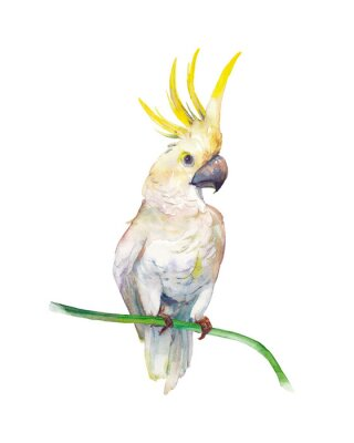 Sticker Watercolor tropic bird: yellow crested cockatoo. Single parrot on white background. Natural illustration