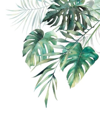 Sticker Watercolor tropical leaves poster. Hand painted exotic monstera and palm green branches composition on white background. Summer plants illustration