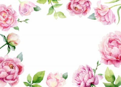 Sticker Watercolor vector hand painting card of peony flowers and green leaves.