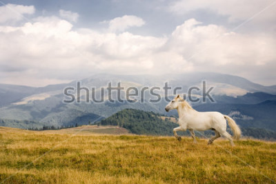 Sticker White horse