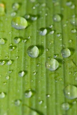 Sticker wmangé rdrops sur une feuille verte