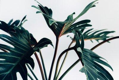 Sticker Xanadu tropical exotique feuilles sur les concepts de background.nature blanc