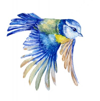 Sticker птица синица