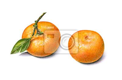 Сolor watercolor tangerines
